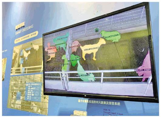"""盛煌注册:在魔都上海,一群新农民种出""""新地标""""(图1)"""